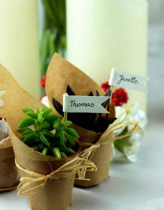 Sukulenty - rośliny jako prezent dla gości weselnych
