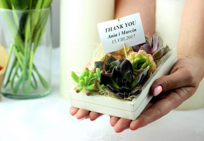 Sukulenty, rośliny - modny upominek dla gości weselnych